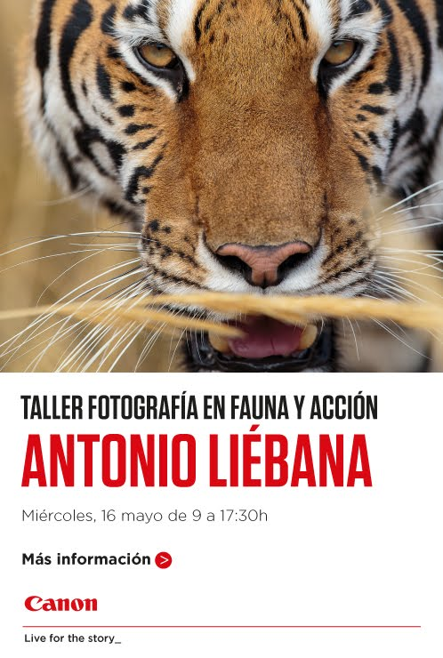 Taller de Fotografia en Fauna y Acción
