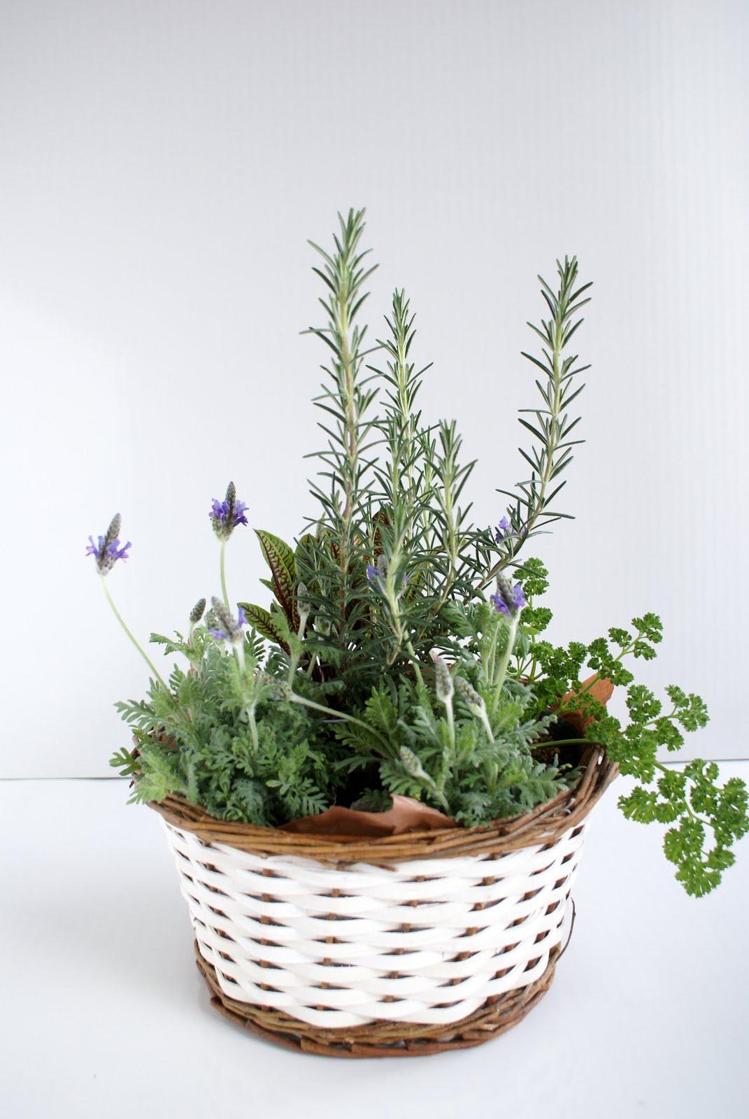 寄せ植え herb