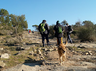 Camí pedregós enmig del Bosc de la Cortada