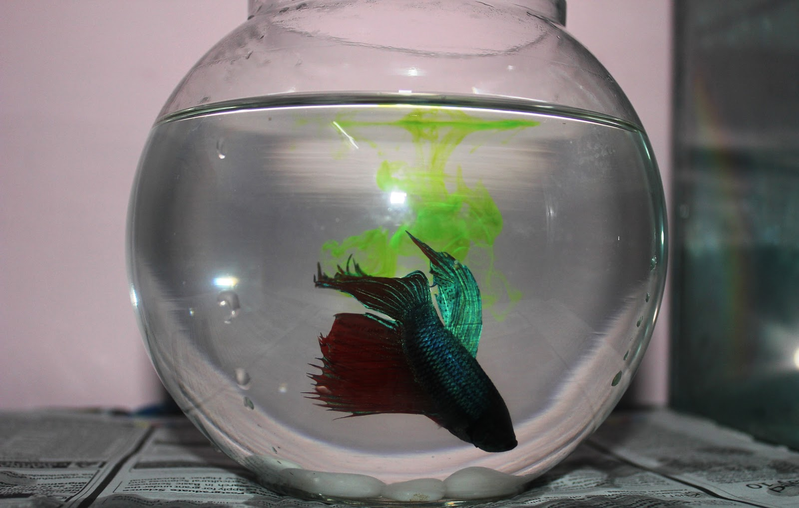 Aquariumhobby fish bowls and tanks for How to make a fish bowl