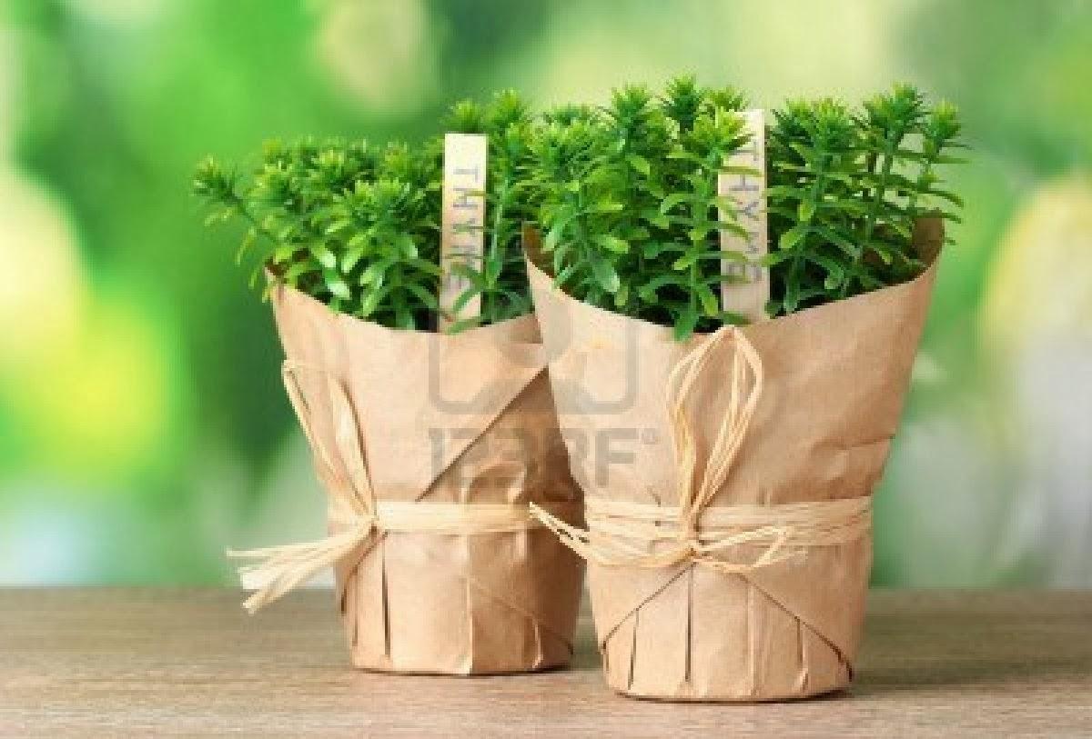 5 plantas arom ticas para tener en casa for Huerta de aromaticas en macetas
