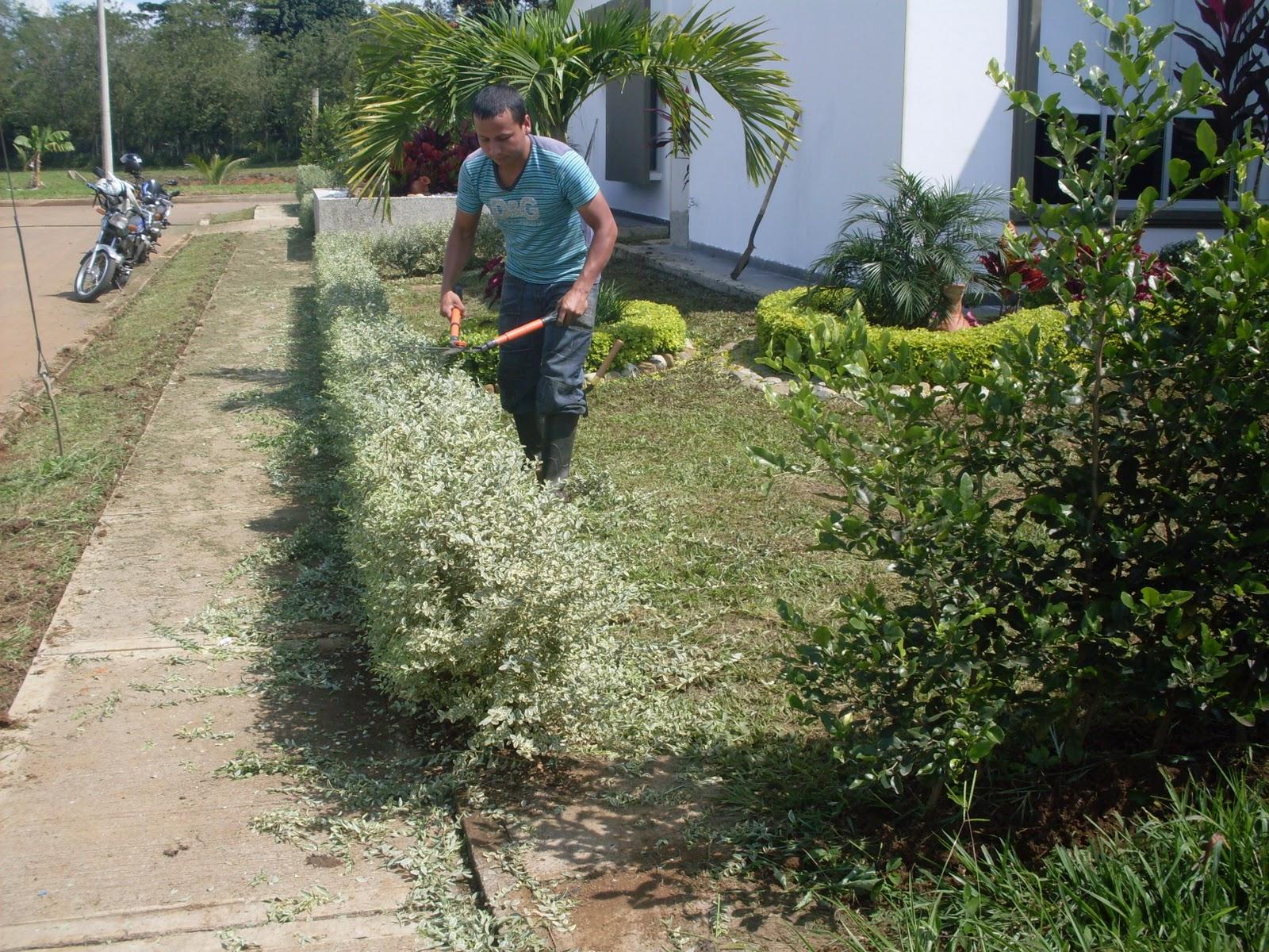 Lotos paisajismo medio ambiente for Mantenimiento de jardines