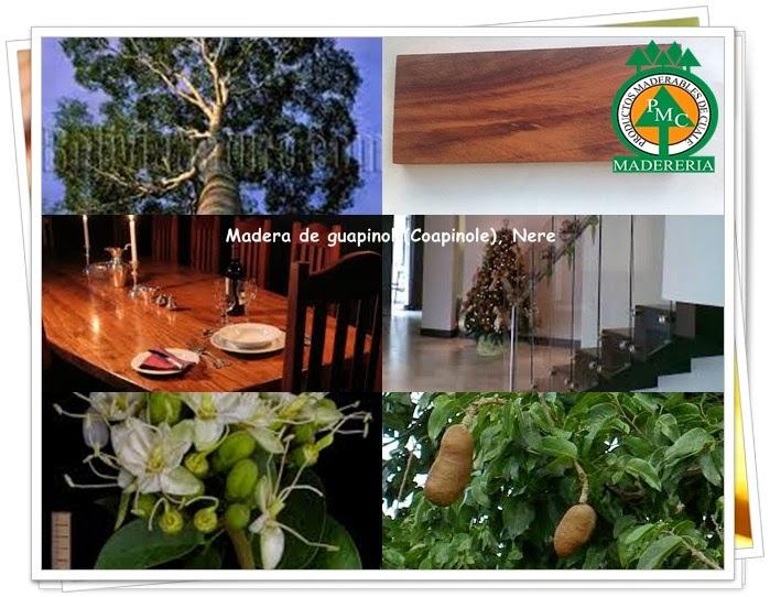 maderas-exoticas-guapinol-coapinole-nere-maderables-cuale-vallarta