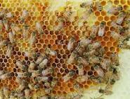BEES WAX SUPPLYER BALI