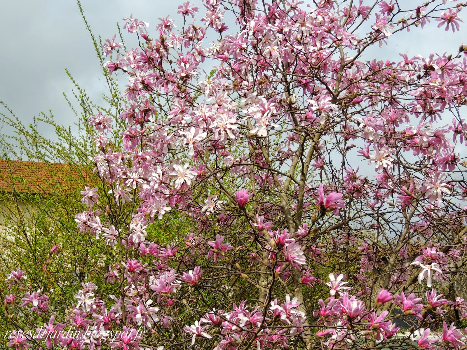 Il etait un petit jard 39 ain printemps au jardin for Jardin 8686