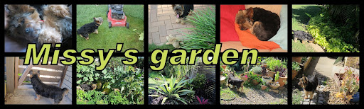 Missy&#39;s Garden