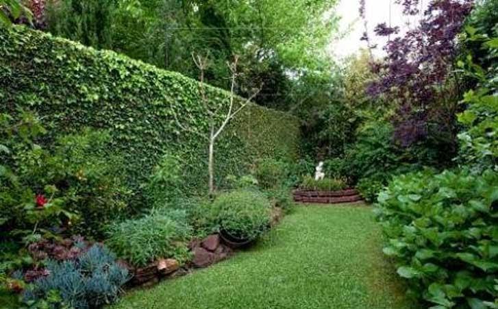 Meu pomar muro verde Plantas para paredes verdes