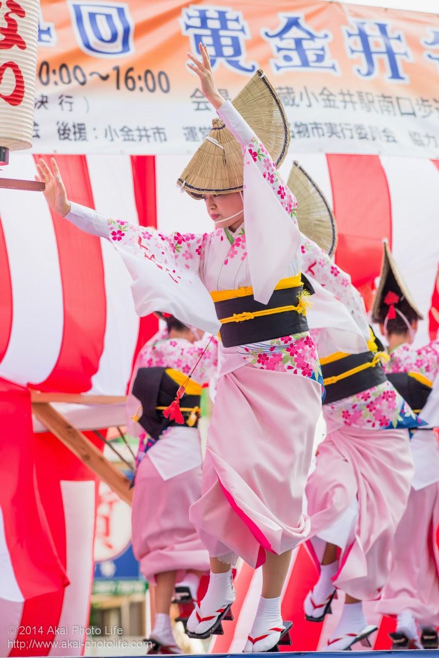 阿波踊り 紅連