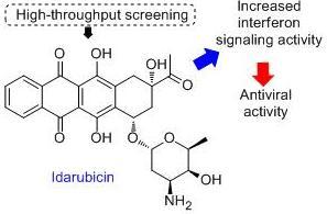 idarubicin, antiviral, interferon signaling