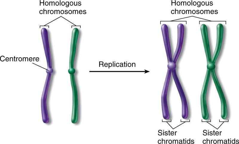 Differenza tra celula animale vegetale yahoo dating 6