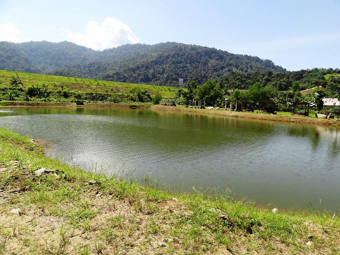 Fishing spots in kuala lumpur selangor ayen freshwater for Freshwater pond fish