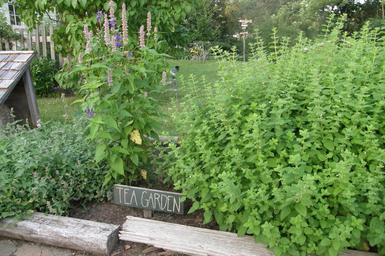 how to start a tea garden