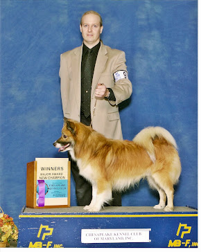 Solstafir earns AKC Champion Title