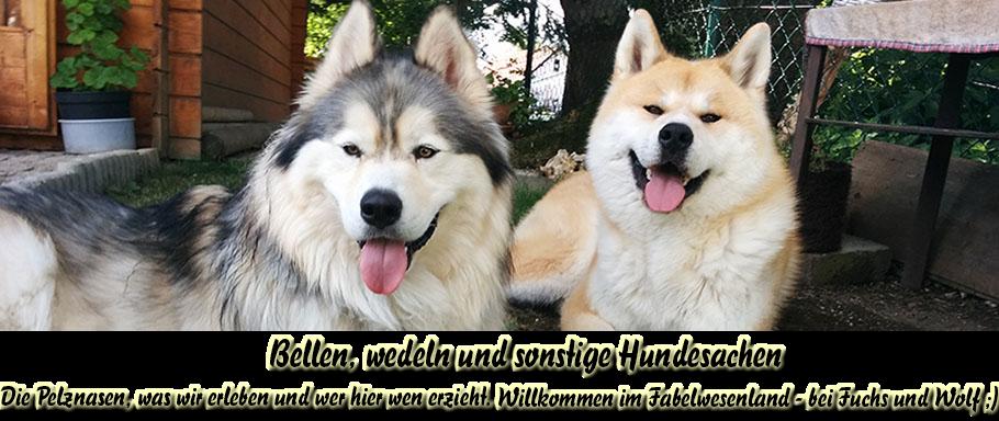 Bellen, wedeln und sonstige Hundesachen