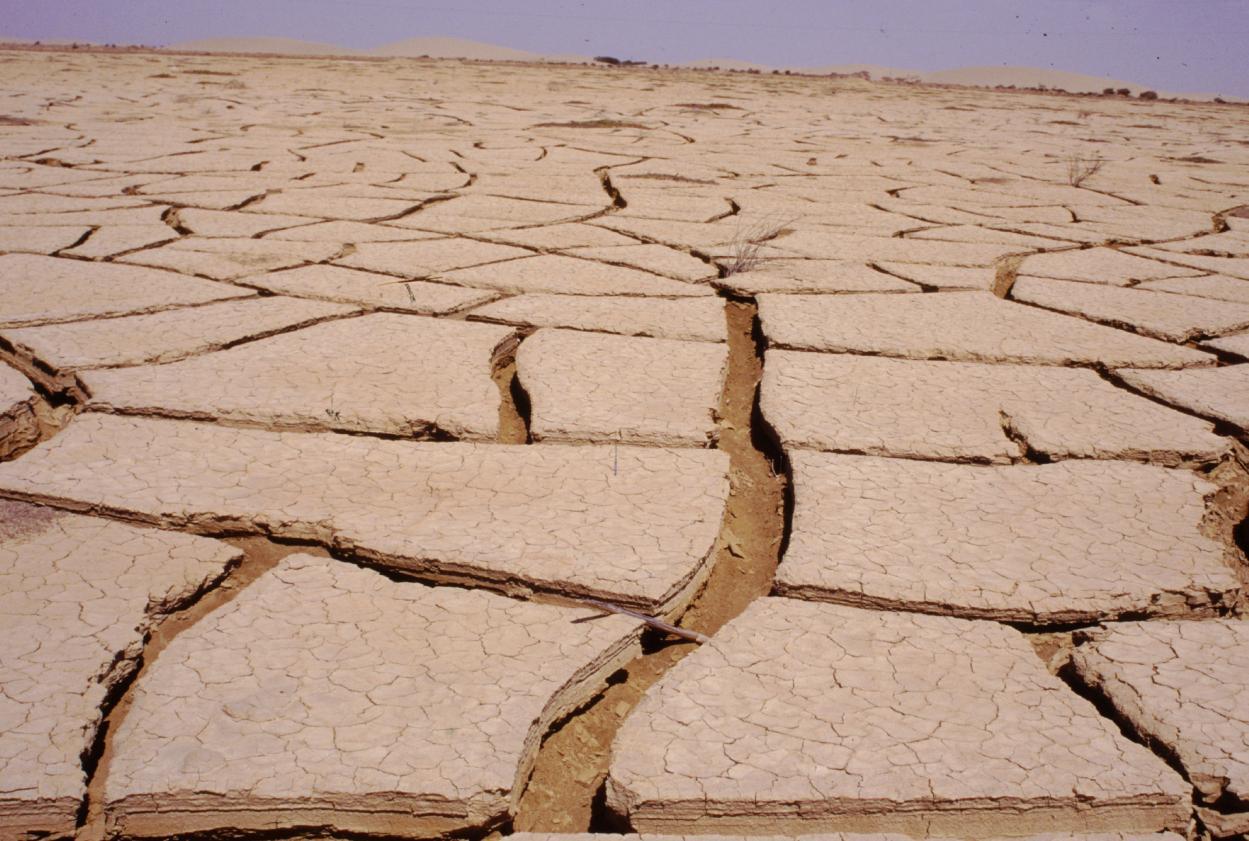 Desertificaci n for Suelo organico dibujo animado