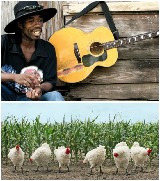 Mind the Music: Chicken in Corn
