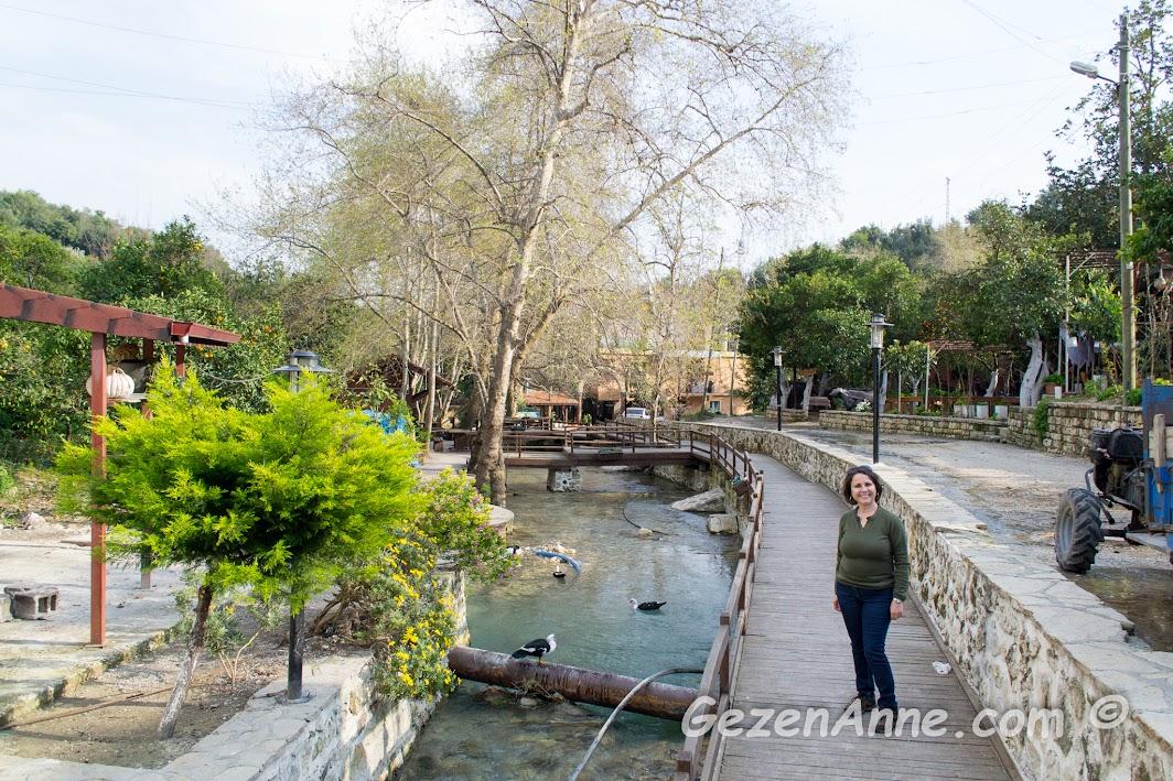 çok güzel düzenlenmiş olan Musa Ağacı çevresi, Hıdırbey köyü Samandağ Hatay