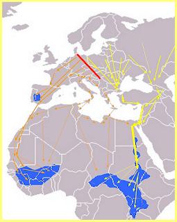 Rutas migratorias de las cigüeñas