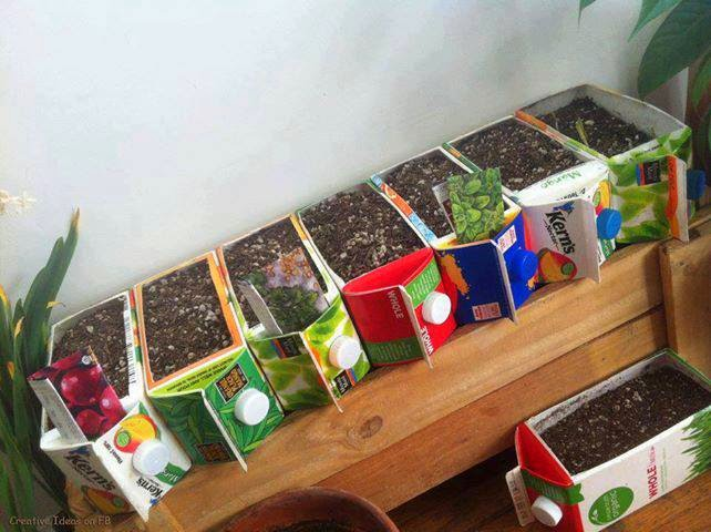 الزراعة فى معلبات منتجات الالبان والعصائر