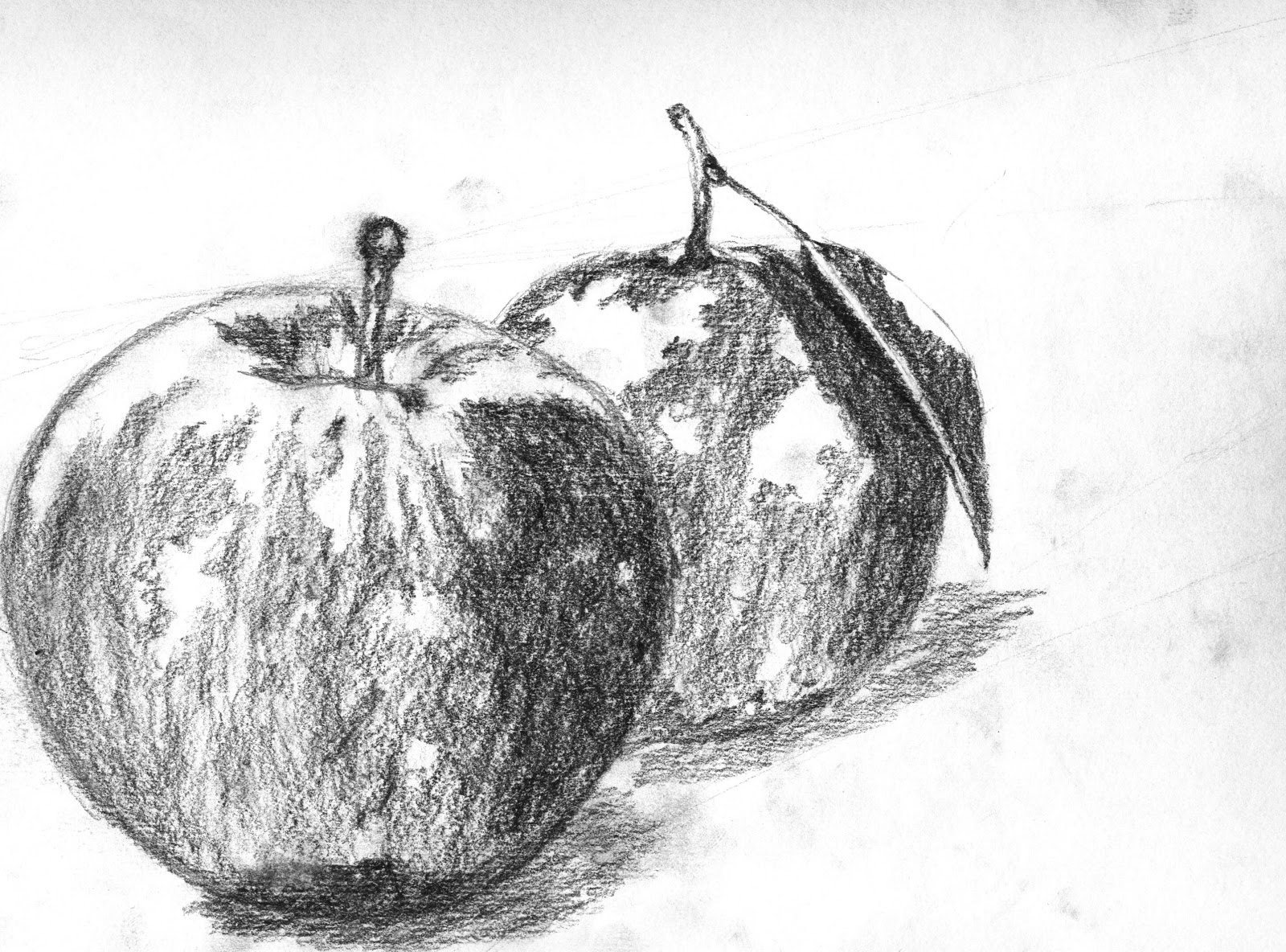 Line Drawing Natural Forms : Observational drawing still life natural forms