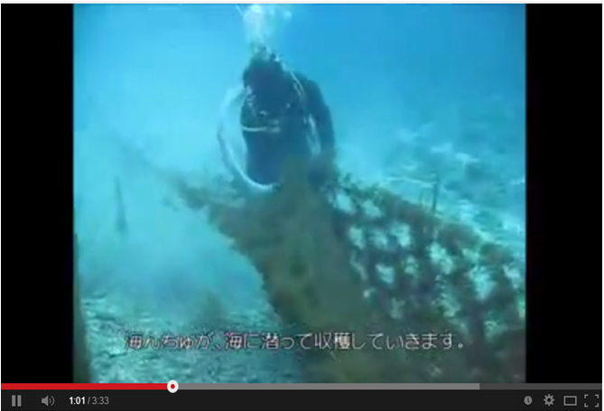 褐藻採收(沖繩好米亞)