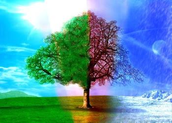 Seasons desktop wallpaper