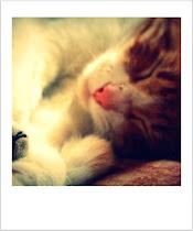 Otto♥
