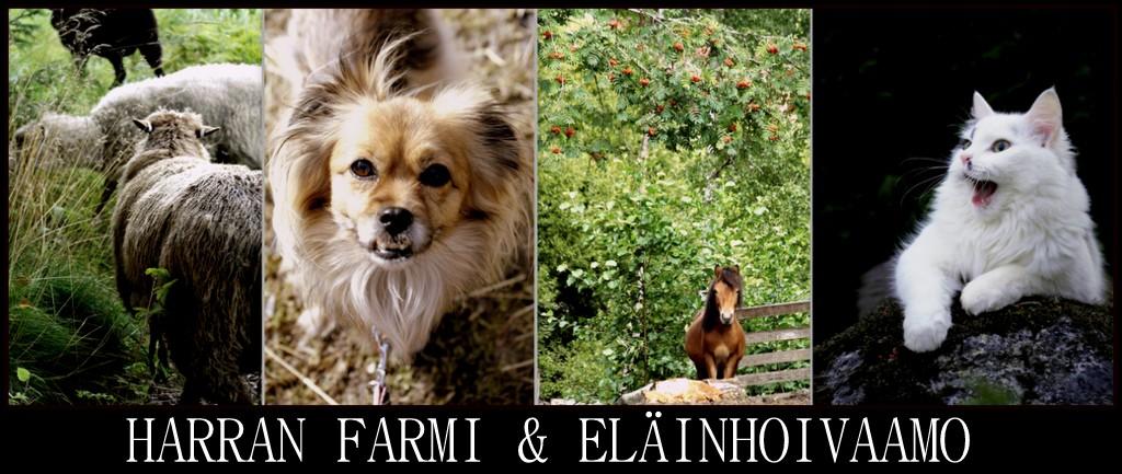 Harran Farmi & Eläinhoivaamo