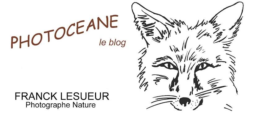 Photoceane - Le blog