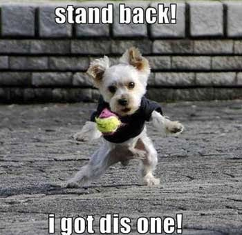most famous dogs cute and funny dog posters