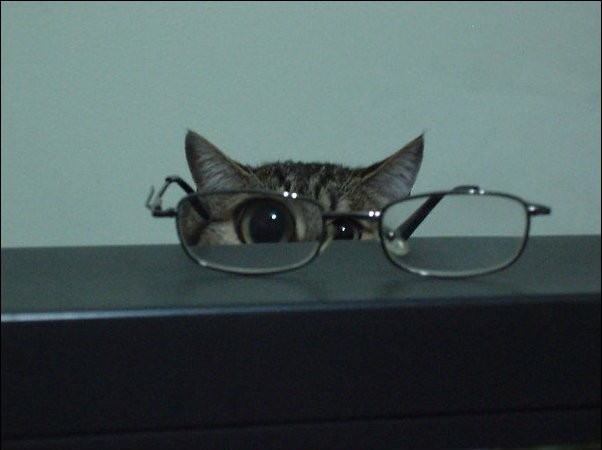 funny cat pictures, cat and glasses