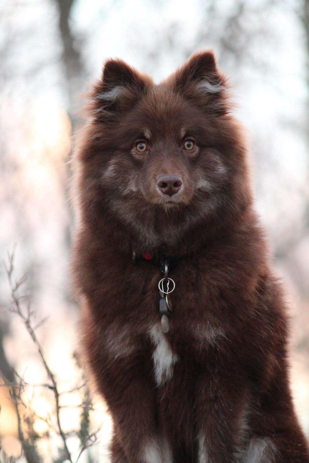 Vår hund Bella