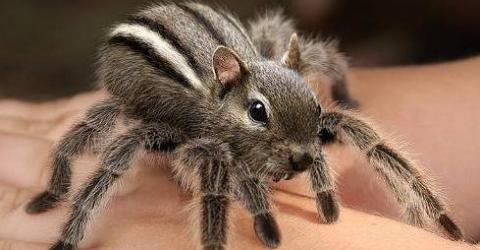Deadliest spider in the world - photo#6