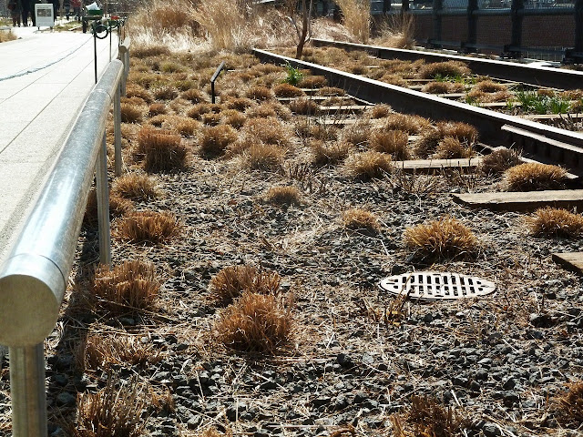Recently cut sedges and grasses at the High Line