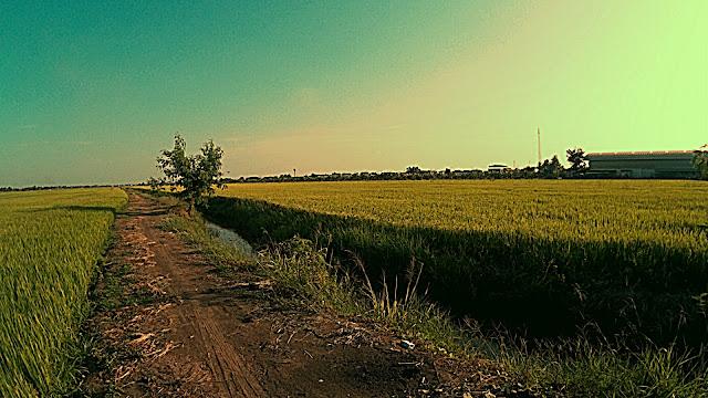 ทุ่งนาไทยสวยๆ กับทางบนคันนา