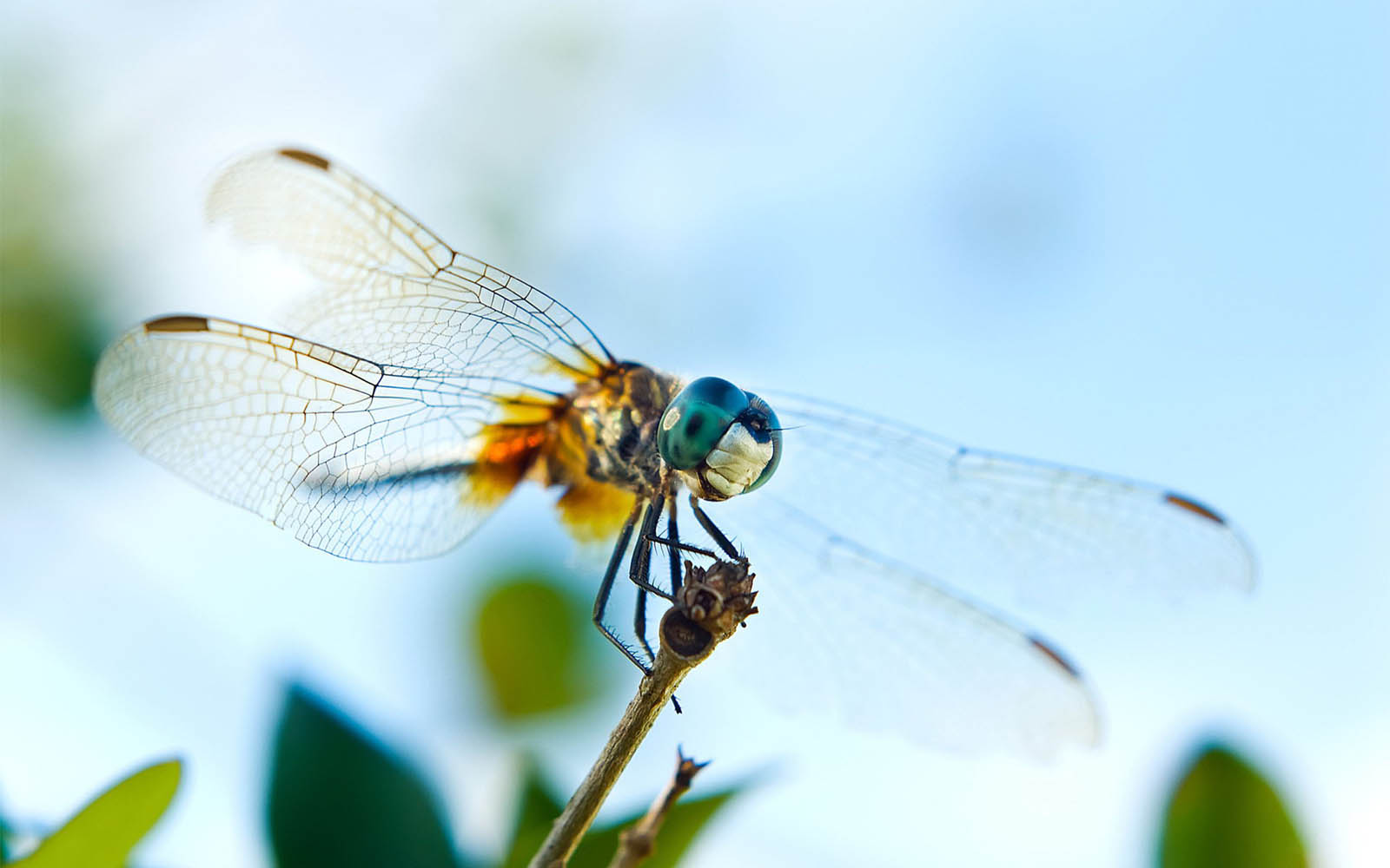 Tag Dragonfly Wallpapers Backgrounds PhotosImages And Pictures For