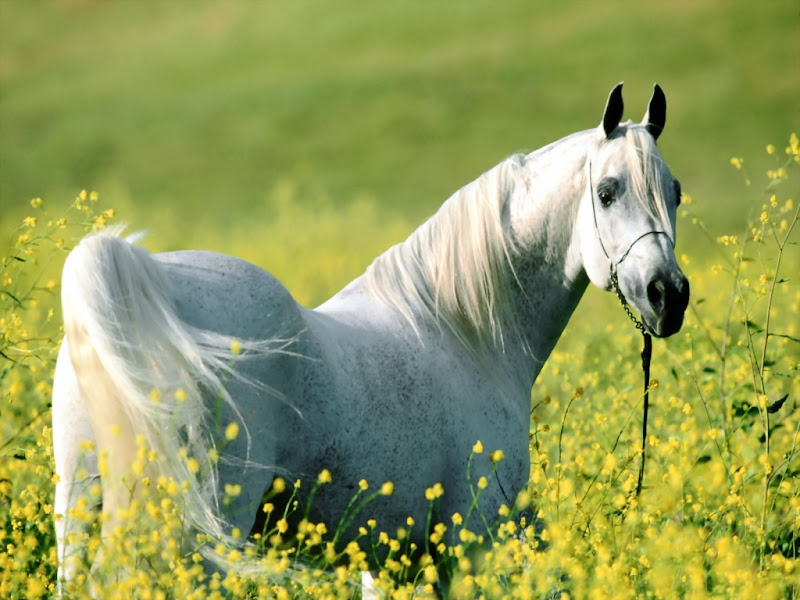 Horse - Beautiful Desktop WallPapers Seen On www.coolpicturegallery.us