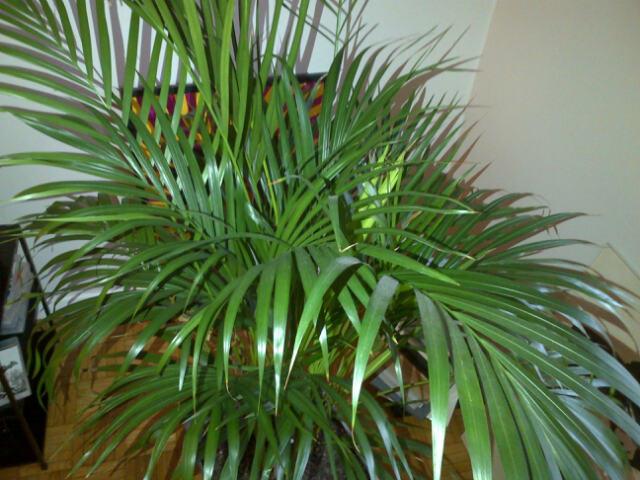 Lestracasducabas lustrant pour plantes vertes for Des plantes vertes
