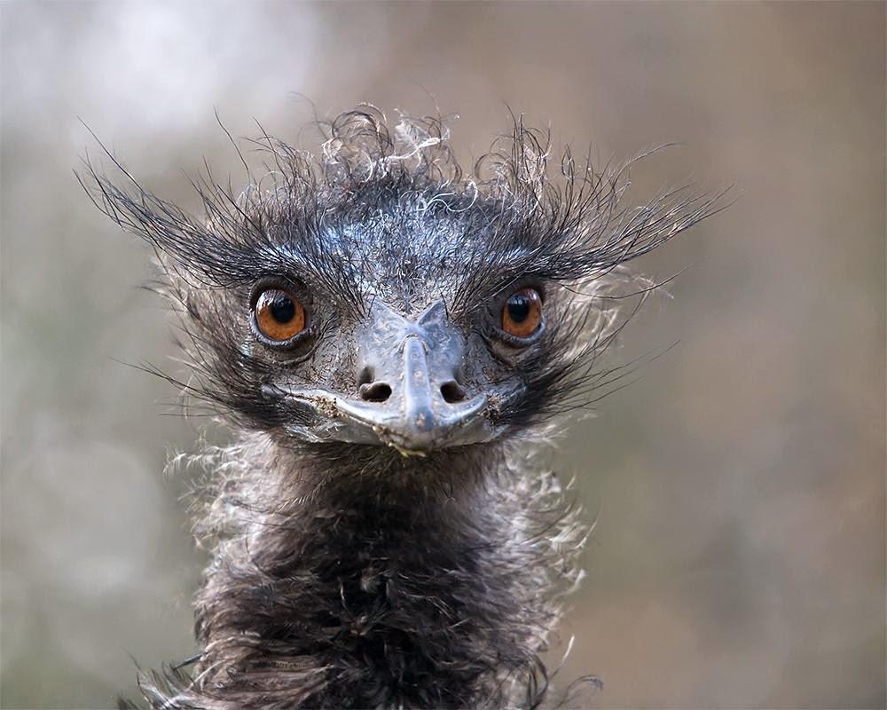 Wildlife Amazing Pictures Photography - Entertainment