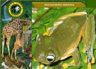 TSI Jeung IPB Kembangkan Konservasi Katak