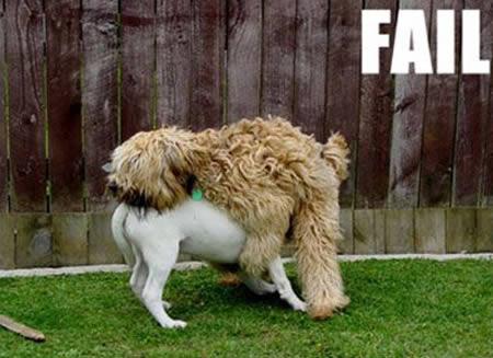 Funny animals fails funny animals fails funny animals fails funny