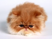cute cat. No comments: · Email ThisBlogThis! cute cat