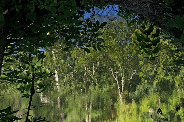 Sharon Woods; Cincinnati; water; reflection
