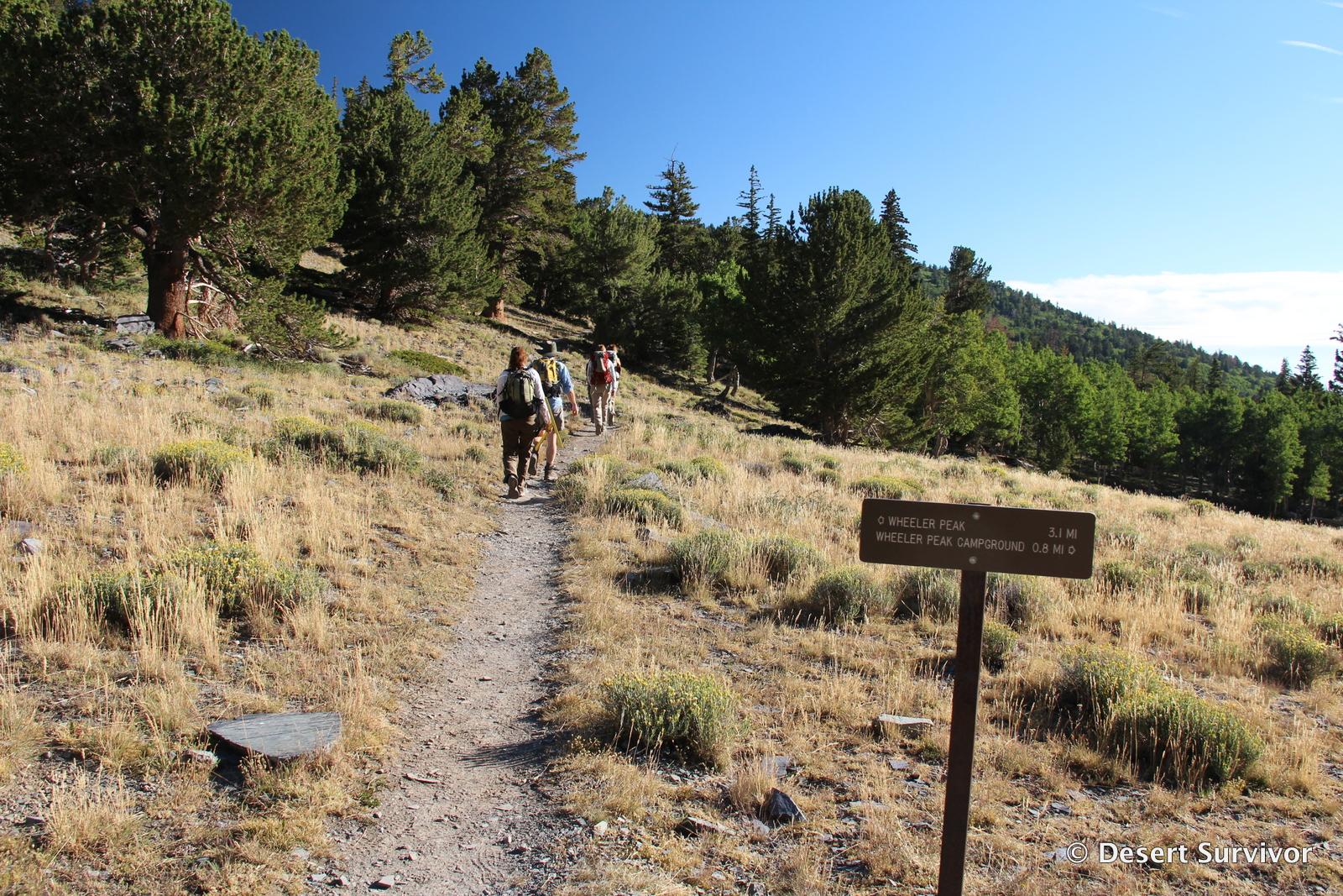 Desert Survivor A Trip up Wheeler Peak Great Basin National Park