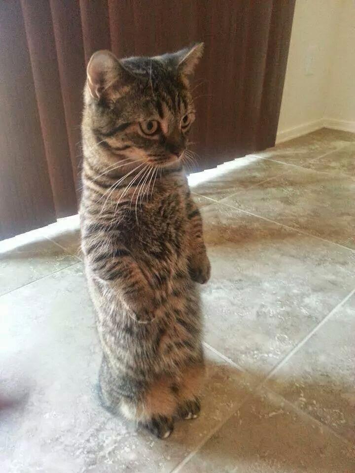 funny cat, cute cat pictures