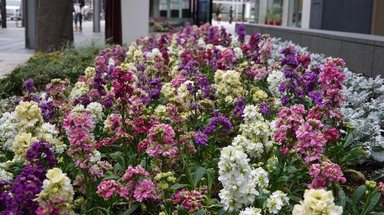 flores para jardim verao : flores para jardim verao:Um jardim para cuidar: Para um verão mais florido ! as minhas quatro