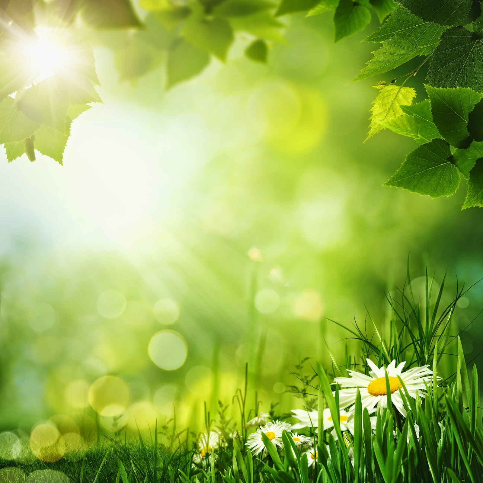 Imagenes fotograficas imagenes bonitas de flores para for Fondos para tablet