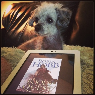 Murchie lays on his fuzzy pillow, head raised and ears perked as he looks at something outside the frame. In front of him is a white Kobo with Fool's Quest's cover on its screen. The cover features a dark-haired white guy in vaguely medieval dress wielding an ax. Ghostly wings emerge from his shoulders.