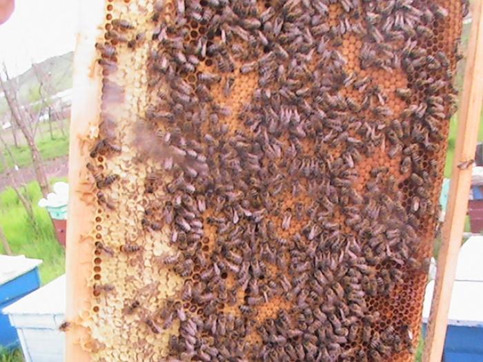 Fonduri europene pentru apicultura