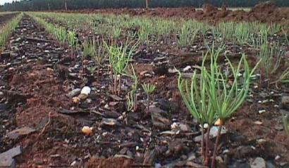 Proyecto de Forestación - Plantones
